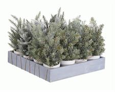 mini alberi innevati c/vaso assortiti cm.25